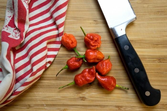 tabasco soße selber machen chilli haus gemacht