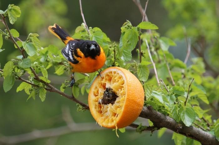vogelfutterhaus selber bauen orangenschale
