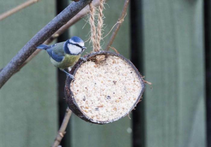 vogelfutterhaus selber bauenlandeplatz kokosnuss
