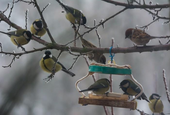 vogelfutterhaus selber bauenlandeplatz meisen