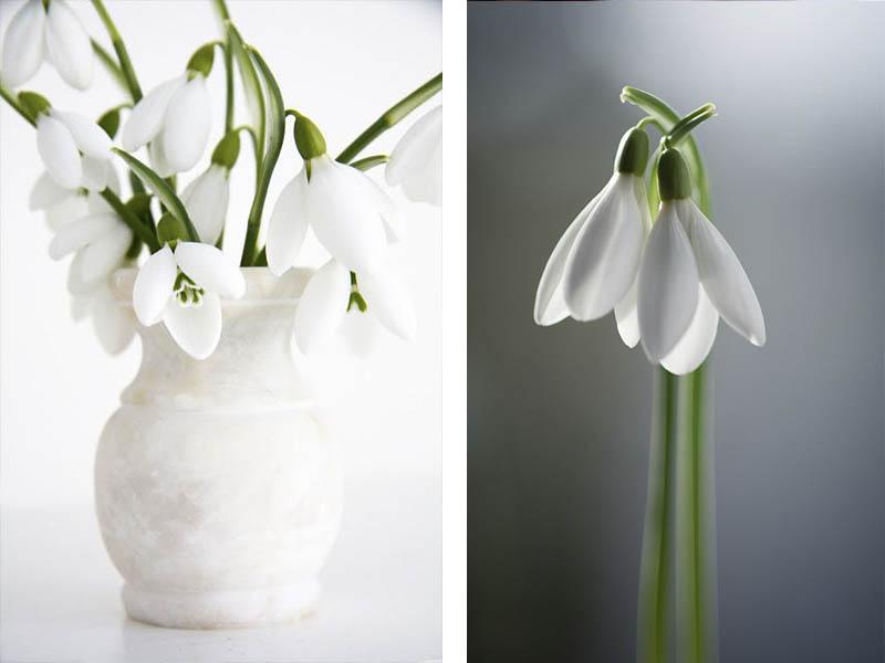 Frühblüher Schneeglöckchen Vase