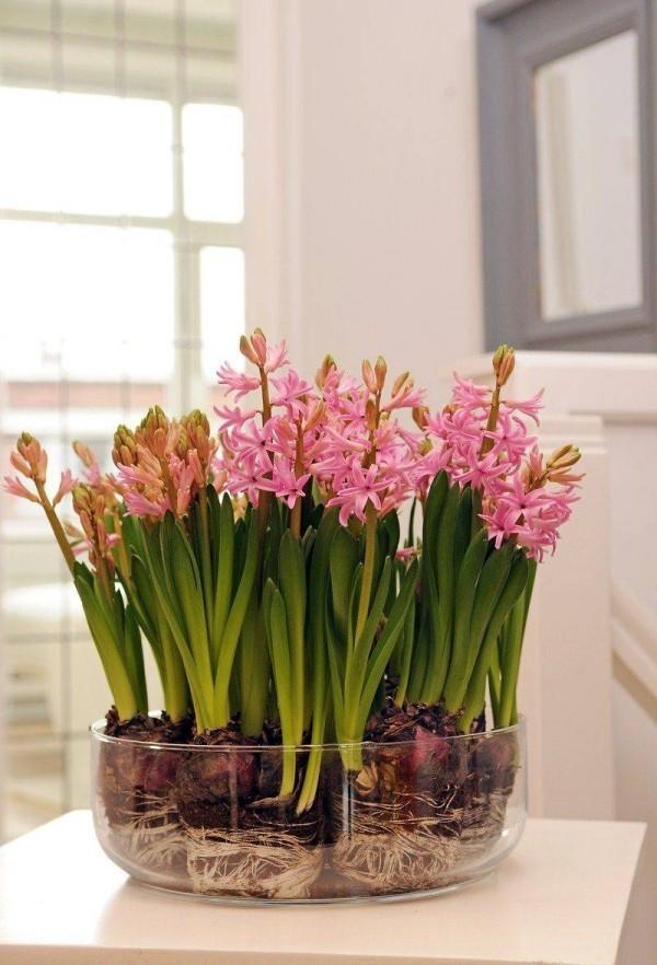 Frühlingsblumen Hyazinthen