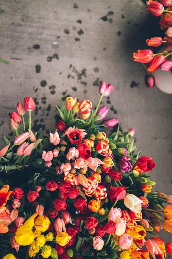 Frühlingsblumen Tulpen