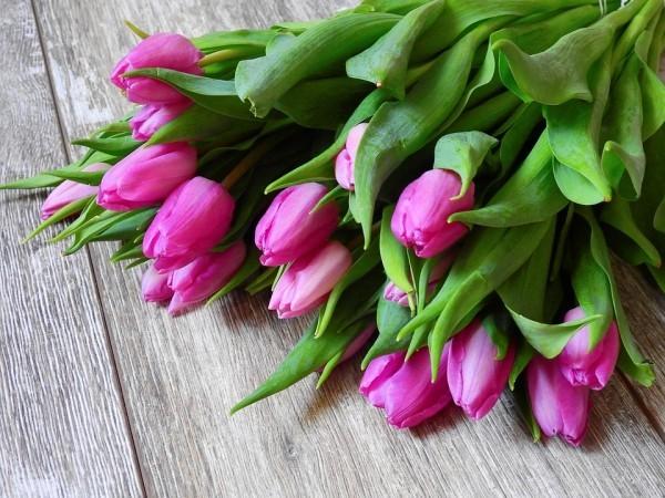 Frühlingsblumen Tulpen Natur
