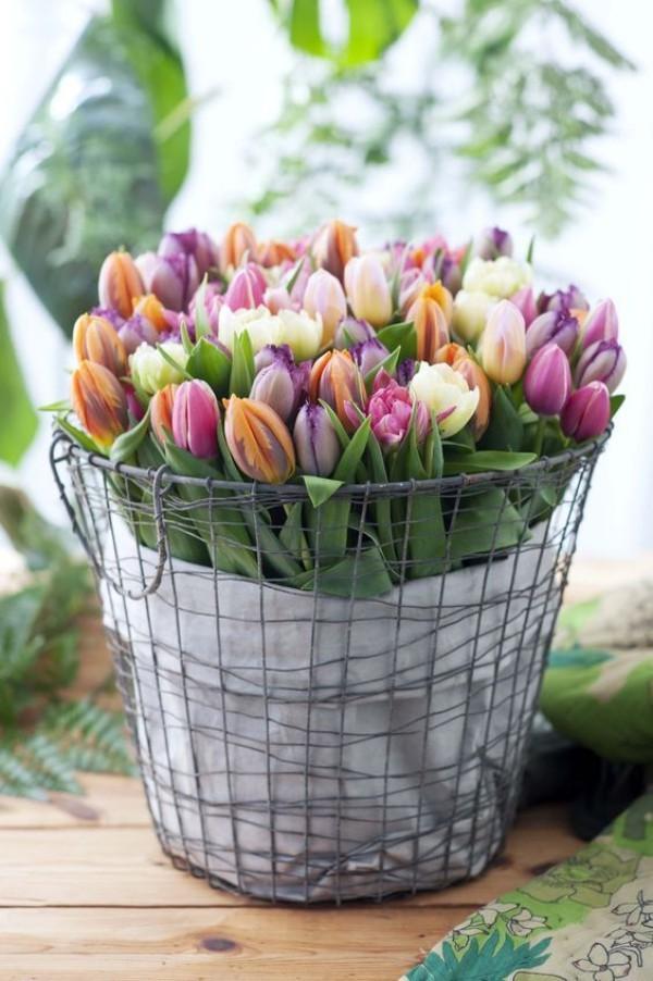 Frühlingsblumen schön bunt Tulpen
