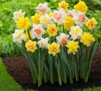 Schön, schöner ….Frühlingsblumen!