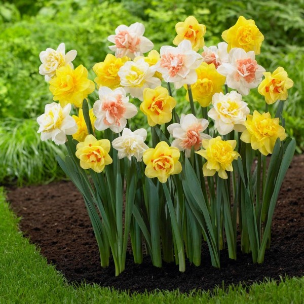 Frühlingsblumen schöne Narzissen i