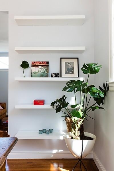 Klassische Wohnideen schöne Zimmerpflanzen