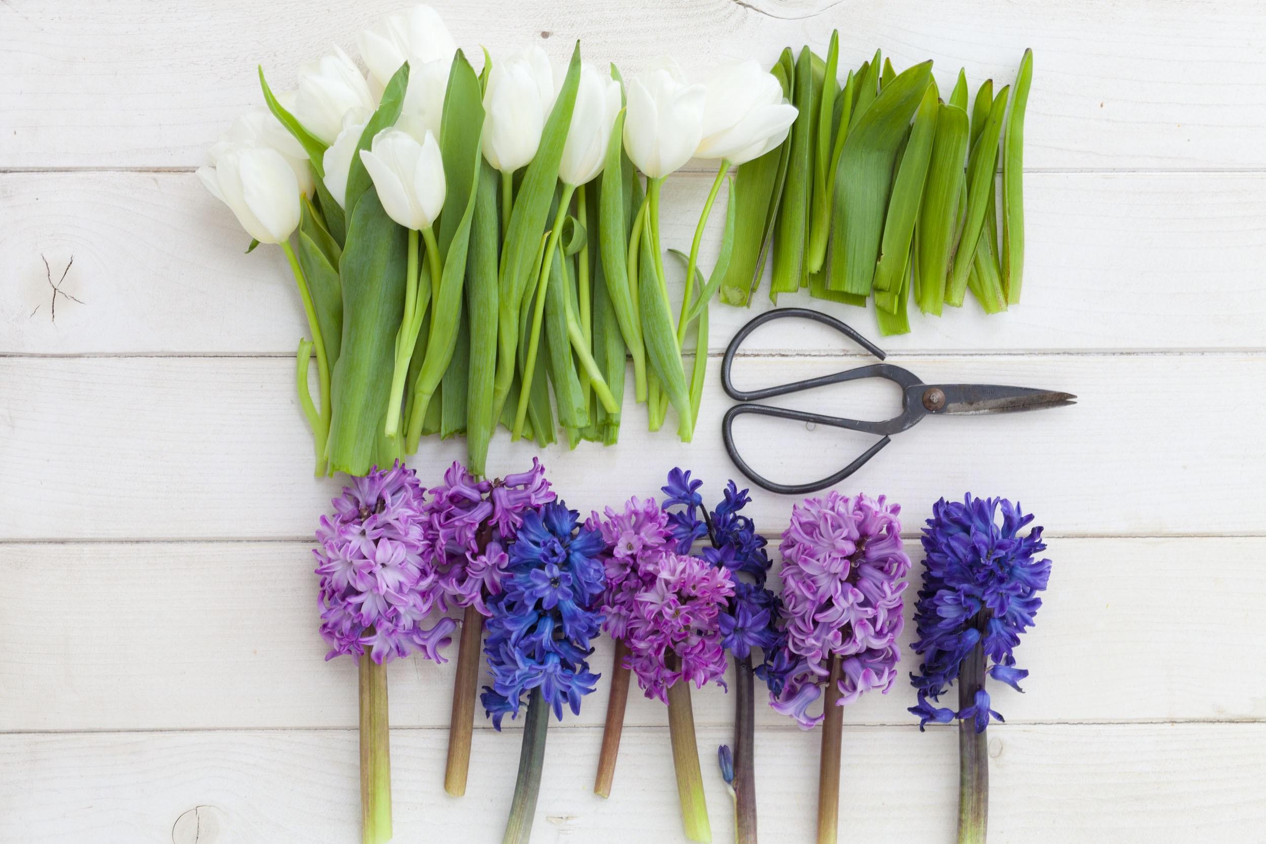 Schön, schöner ….Frühlingsblumen! - Fresh Ideen für das Interieur ...