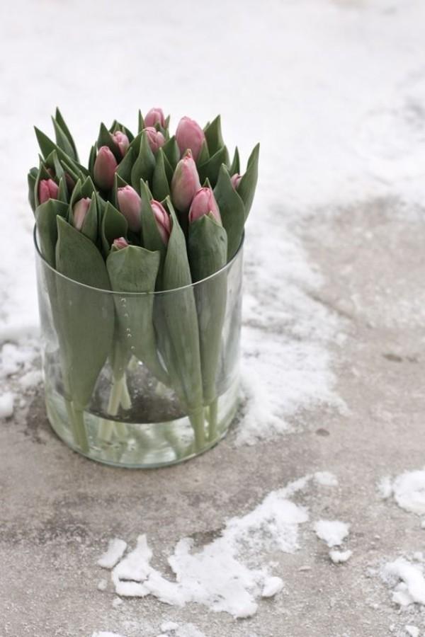 Tulpen Freude
