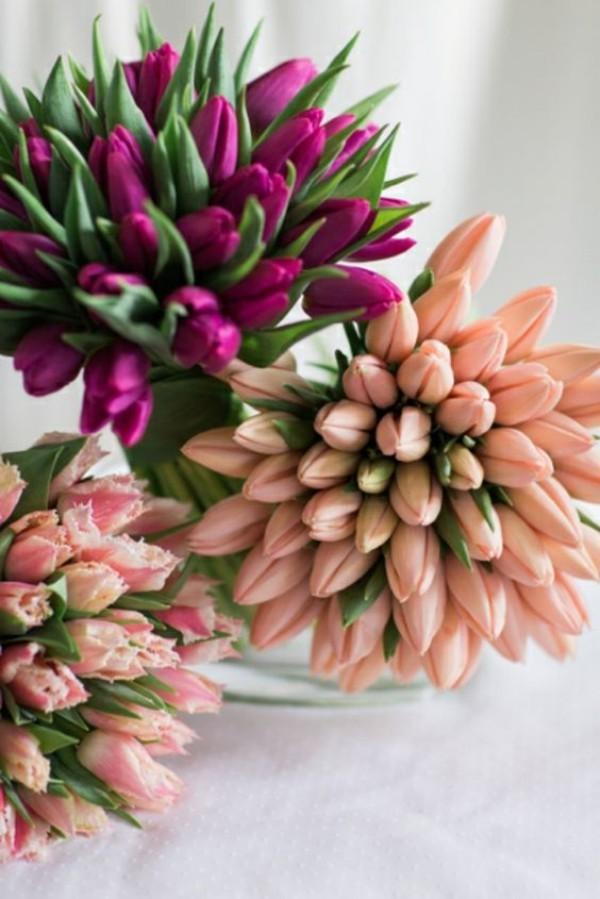 Tulpen schöne Frühlingsblumen