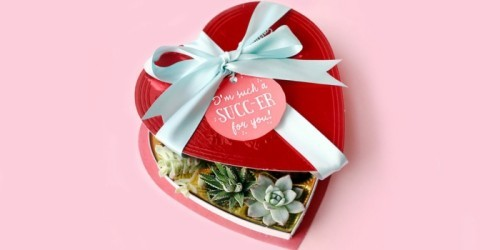 diy valentinsgeschenk diy valentinstag anders denken sukkulente