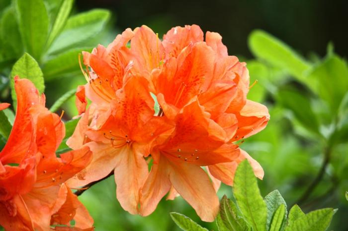 farbgestaltung tangerine trandfarbe muster schlafzimmer ideen tangerine bluete