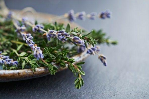 lavendel im topf frische blüten lavendelöl selber machen