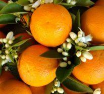 Orangenblütenwasser – Anwendungstipps und weitere Geheimnisse
