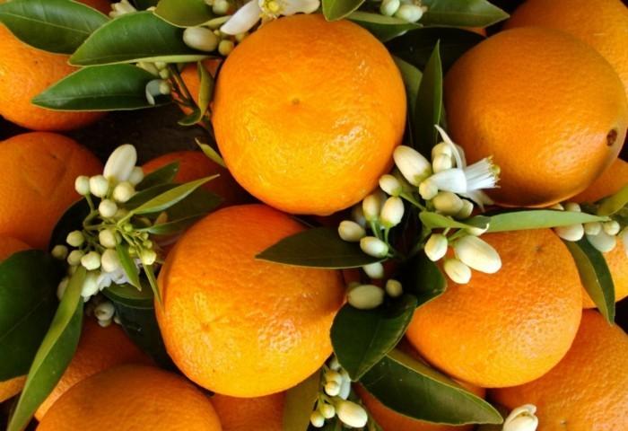 orangenbluetenwasser orangenblueten knospen
