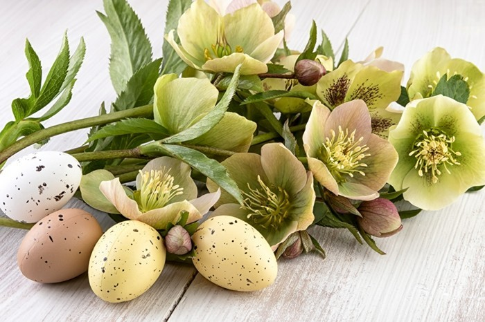 osterdeko basteln blumensorten weiße blüten nest creme