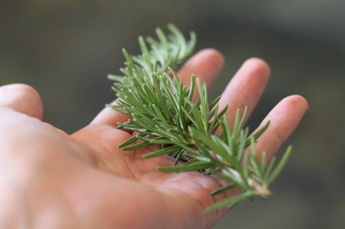shampoo selber machen natuerlich hausgemacht pflanzlich