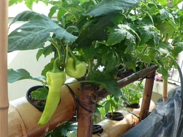 Balkon Garten mit essbaren pflanzen