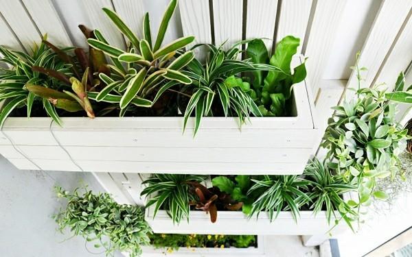 Balkon Garten vertikal in pflanzern