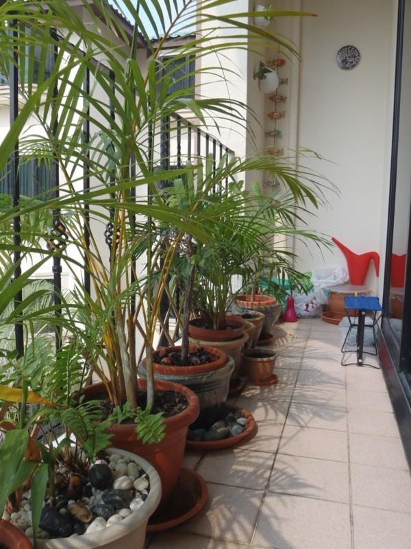 Balkon bepflanzen Geländer verschönern
