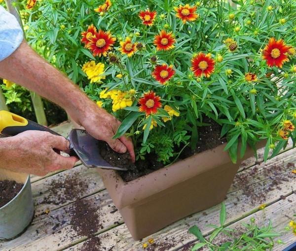Balkon bepflanzen Pfölanzer Ideen