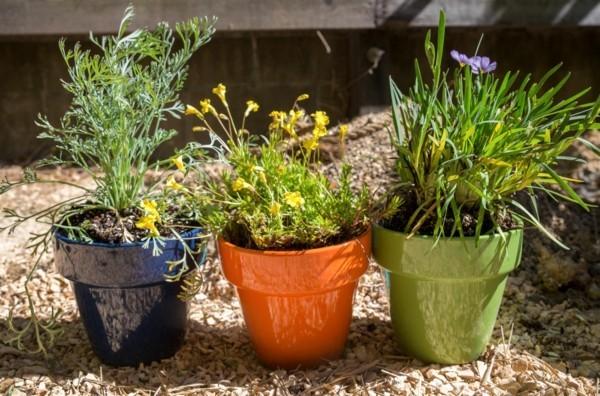 Balkon bepflanzen mit Pflanzern Farbe setzen