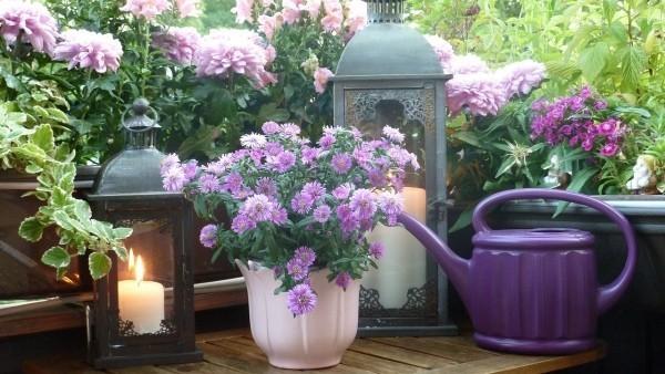 Balkon bepflanzen mit tollen Lila Pflanzen