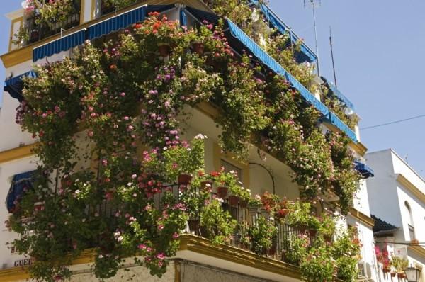 Bereicherung des Gebäude-Bildes Balkon bepflanzen