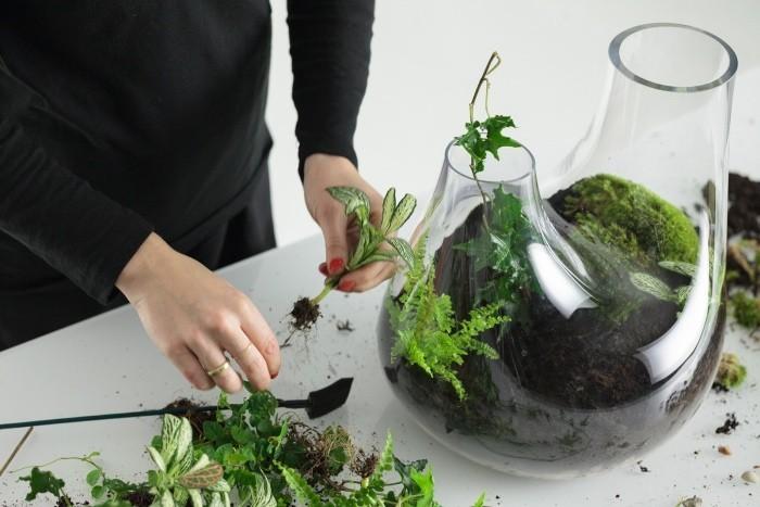Pflanzen Terrarium einsatz der pflanzen