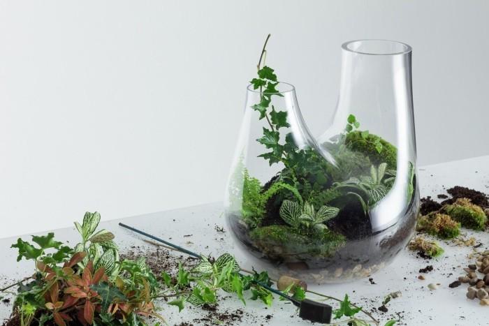 Pflanzen Terrarium grüne und erde