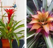 Pflegeleichte Zimmerpflanzen, die nie eingehen