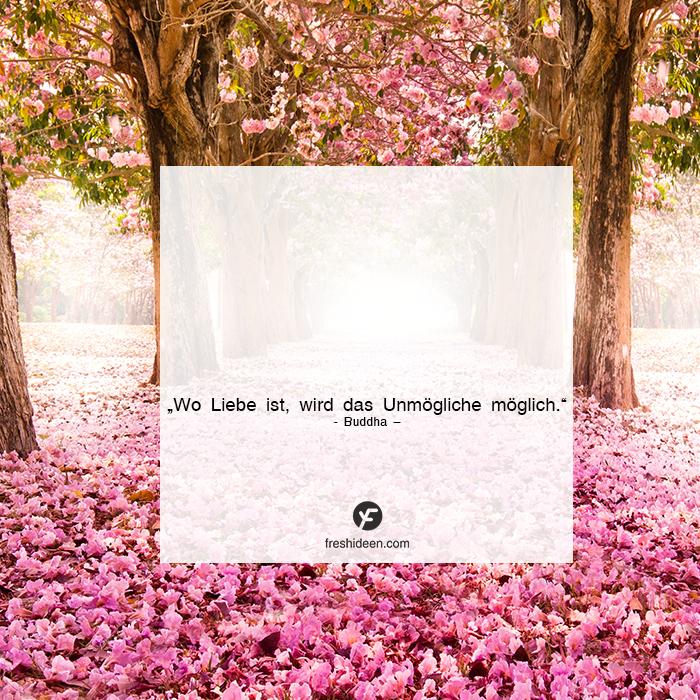Zitat Buddha Liebe alles möglich