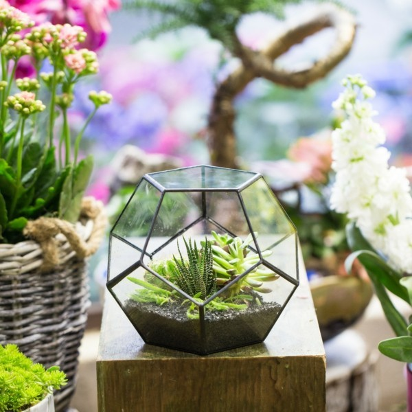 alter lampenschirm pflanzen terrarium