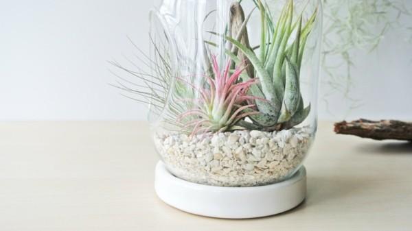 armeladenglas pflanzen terrarium
