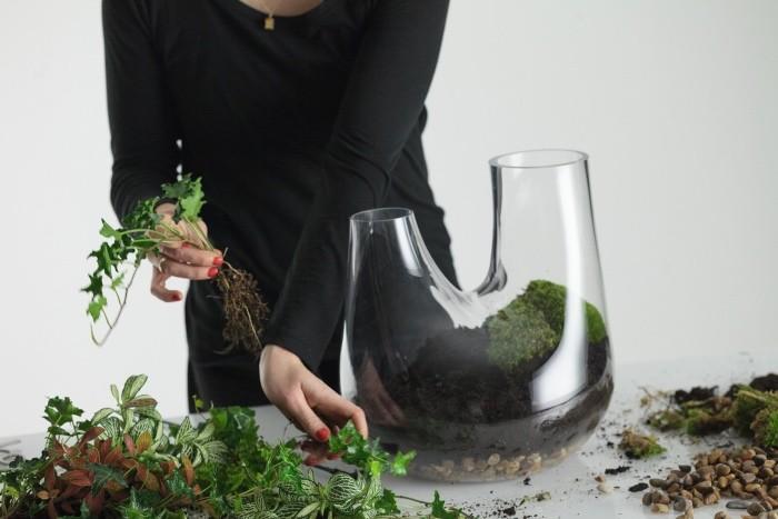 auswahl der pflanzen Pflanzen Terrarium