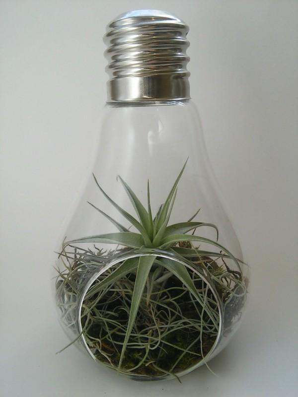 diy glühbirne pflanzen terrarium