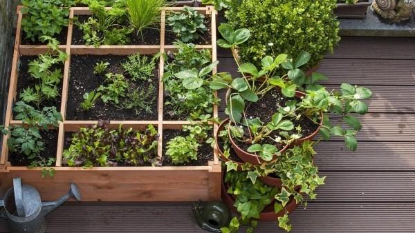 elegante Hochbeeten auf dem Balkon bepflanzen
