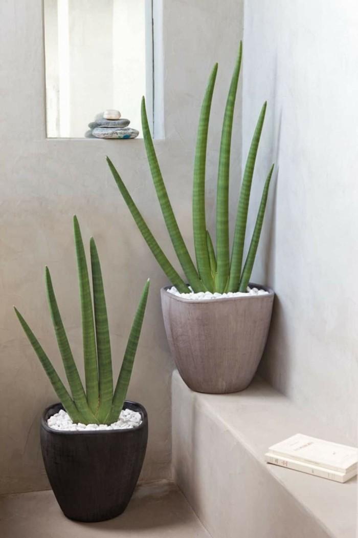 gruene pflanzen badezimmer gestalten aloe