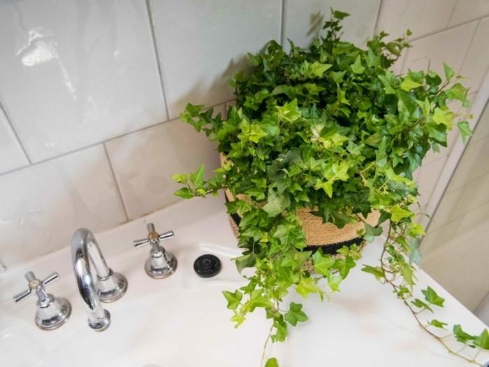 gruene pflanzen badezimmer gestalten doppelte ansicht efeu