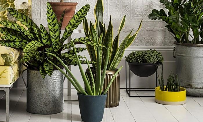 gruene zimmerpflanzen badezimmer gestalten
