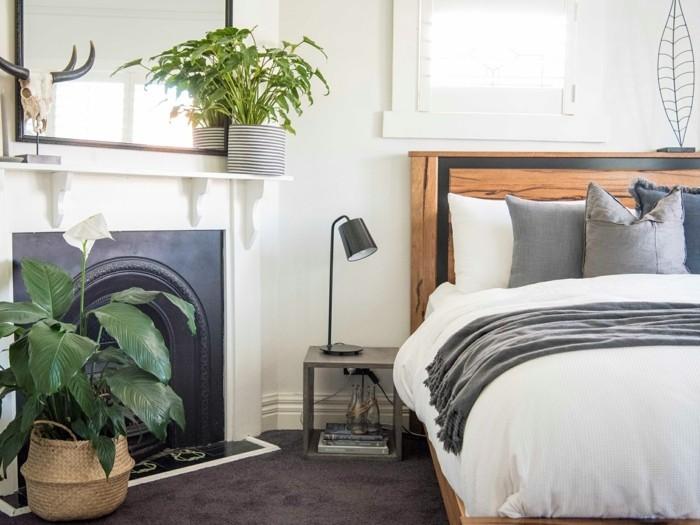 Grüne Zimmerpflanzen und Heilkräuter, die unser Schlaf positiv ...