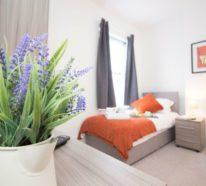 Grüne Zimmerpflanzen und Heilkräuter, die unseren Schlaf positiv beeinflüssen