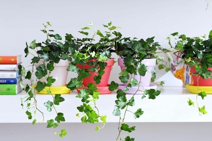 gruene zimmerpflanzen heilkráeutern efeu blumentopf