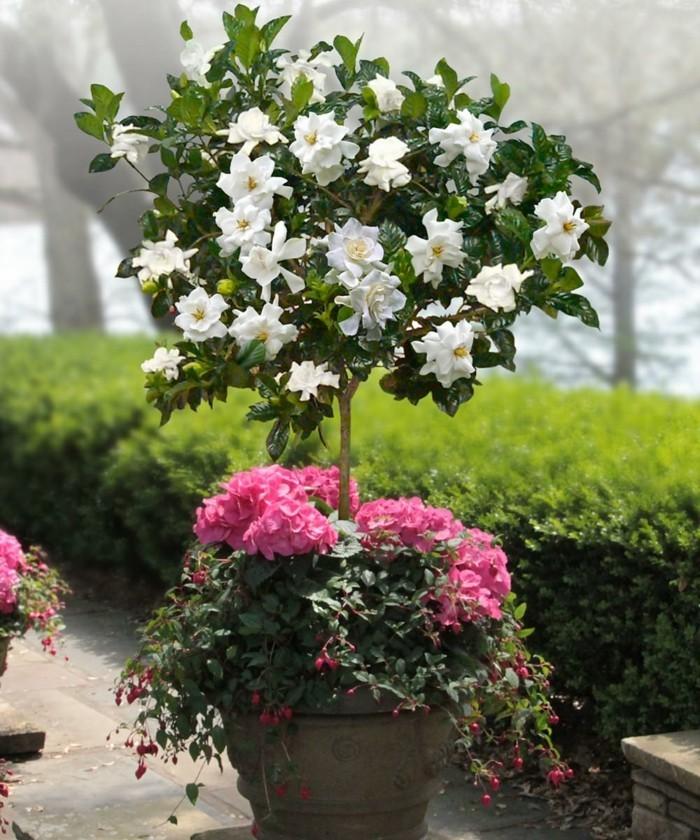 gruene zimmerpflanzen heilkráeutern gardenia