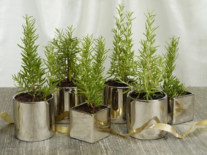 pflanzenkuebel gruene zimmerpflanzen heilkraeeuter