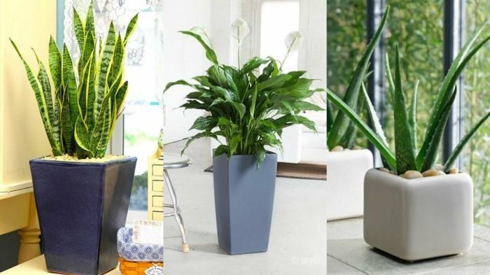 gruene zimmerpflanzen heilkráeutern jasmine trio