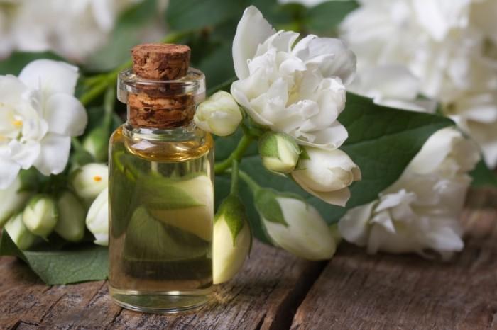 gruene zimmerpflanzen heilkráeutern jasmine