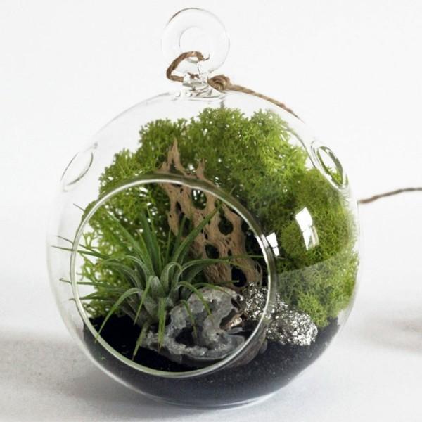 kugelförmiges pflanzen terrarium