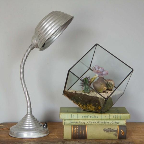leuchte und pflanzen terrarium
